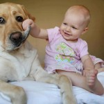 bebe perro