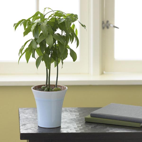 planta-para-casa