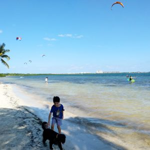 playas pet friendly cancun